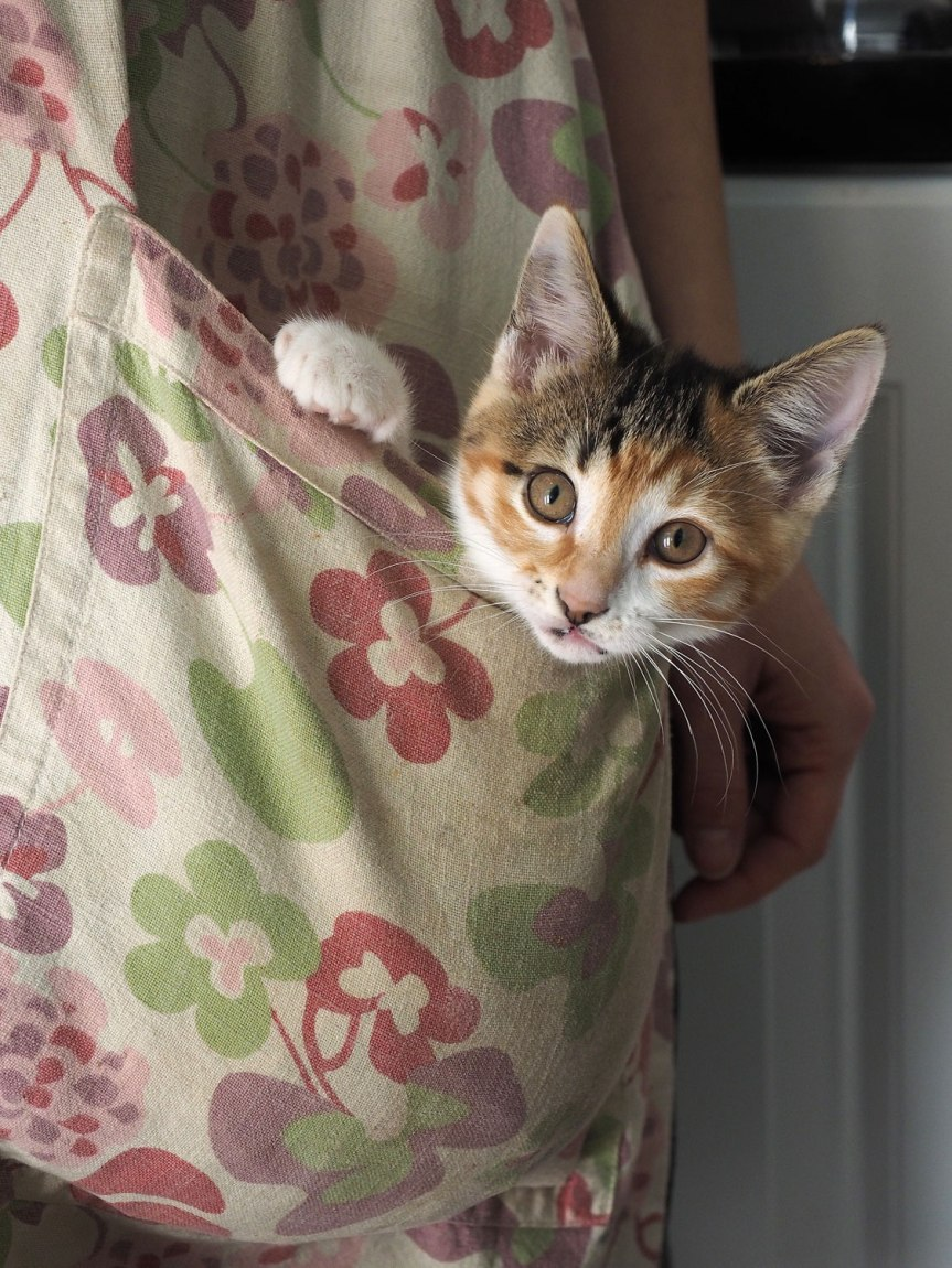 cat-pocket